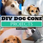 DIY Dog Cone Projects