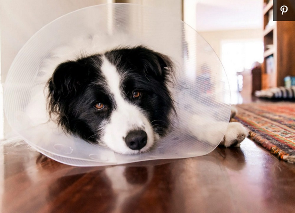 How Long Dogs Should Wear The Cone